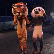 Animadores Tigre-Panda